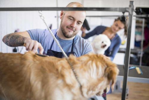 Jeune stagiaire qui donne des soins à un chien