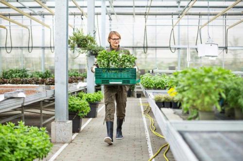 Un jeune en stage dans une jardinerie
