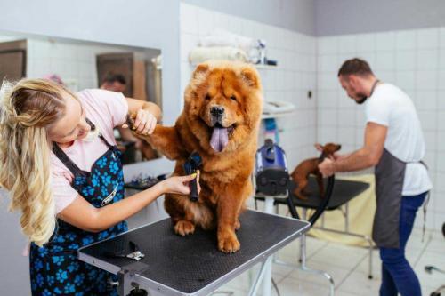 Stage chez un vétérinaire